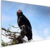 Een Californische condor zit in een boom Plexiglas 80x60 cm - Foto print op Glas (Plexiglas wanddecoratie)