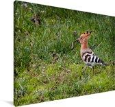 Hop met een prooi in zijn bek en loopt over het gazon Canvas 120x80 cm - Foto print op Canvas schilderij (Wanddecoratie woonkamer / slaapkamer)