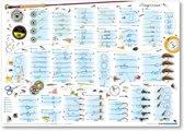 Poster Vissen Vliegvissen Visposter Vliegvis Vissenposter