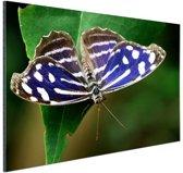 Blauwe Golf vlinder Aluminium 90x60 cm - Foto print op Aluminium (metaal wanddecoratie)