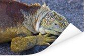 Weergave van een mooie Landleguaan op de rotsen Poster 180x120 cm - Foto print op Poster (wanddecoratie woonkamer / slaapkamer) XXL / Groot formaat!