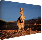 FotoCadeau.nl - Kangoeroe zonsondergang Canvas 30x20 cm - Foto print op Canvas schilderij (Wanddecoratie)