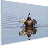 Rosse stekelstaart komt uit het water Plexiglas 180x120 cm - Foto print op Glas (Plexiglas wanddecoratie) XXL / Groot formaat!