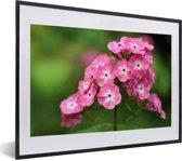 Foto in lijst - Roze vlambloemen met groene achtergrond fotolijst zwart met witte passe-partout klein 40x30 cm - Poster in lijst (Wanddecoratie woonkamer / slaapkamer)