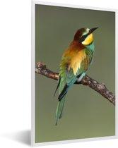 Foto in lijst - Europese bijeneter (Merops apiaster) zit op een tak Sardinië Italië fotolijst wit 40x60 cm - Poster in lijst (Wanddecoratie woonkamer / slaapkamer)