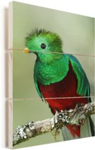 Portret van een felgekleurde Quetzal Vurenhout met planken 20x30 cm - klein - Foto print op Hout (Wanddecoratie)