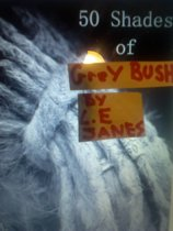 Fifty Shades of Grey Bush