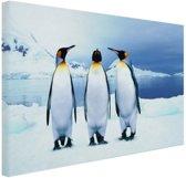 Drie pinguins portret Canvas 60x40 cm - Foto print op Canvas schilderij (Wanddecoratie woonkamer / slaapkamer) / Dieren Canvas Schilderijen