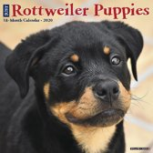 Rottweiler Puppies Kalender 2020