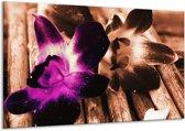 Glasschilderij Bloem | Paars, Bruin, Wit | 120x70cm 1Luik | Foto print op Glas |  F003787