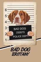 Bad Dog Brittany