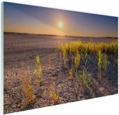 Droge woestijn met plantjes  Glas 30x20 cm - klein - Foto print op Glas (Plexiglas wanddecoratie)