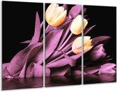 Glasschilderij Tulp   Oranje, Paars, Zwart   120x80cm 3Luik   Foto print op Glas    F003919