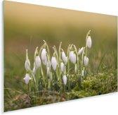 Wilde sneeuwklokjes Plexiglas 90x60 cm - Foto print op Glas (Plexiglas wanddecoratie)