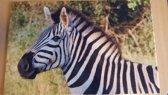 Deurmat 40x60 Zebra