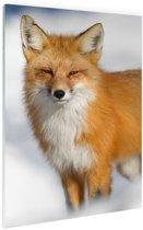 Rode vos close-up Glas 20x30 cm - klein - Foto print op Glas (Plexiglas wanddecoratie)