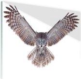 Vliegende uil Glas 180x120 cm - Foto print op Glas (Plexiglas wanddecoratie) XXL / Groot formaat!