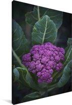 Een paarse bloemkool omringd door mooie bladeren Canvas 60x90 cm - Foto print op Canvas schilderij (Wanddecoratie woonkamer / slaapkamer)