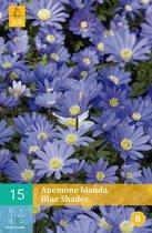 Anemone blanda Blue Shades - anemoon - 2 sets
