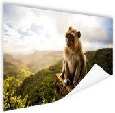 Aap op Mauritius Poster 120x80 cm - Foto print op Poster (wanddecoratie woonkamer / slaapkamer) / Dieren Poster