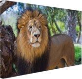 Staande mannelijke leeuw Canvas 120x80 cm - Foto print op Canvas schilderij (Wanddecoratie)