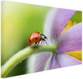 Lieveheersbeestje op een bloem Canvas 180x120 cm - Foto print op Canvas schilderij (Wanddecoratie woonkamer / slaapkamer) / Dieren Canvas Schilderijen XXL / Groot formaat!