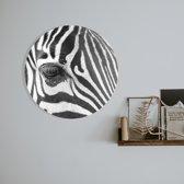 Wandcirkel Dibond Metaal - Zebra | 50 x 50 cm | Schurk Design