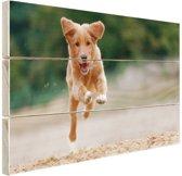 Rennende hond foto Hout 60x40 cm - Foto print op Hout (Wanddecoratie)