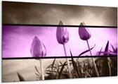 Glasschilderij Tulp | Paars, Grijs, Zwart | 120x70cm 1Luik | Foto print op Glas |  F004462