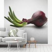 Fotobehang vinyl - Groene stengel ontspringt uit de bloeiende rode ui breedte 280 cm x hoogte 280 cm - Foto print op behang (in 7 formaten beschikbaar)
