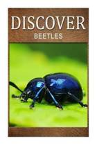 Beetles - Discover