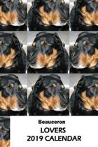 Beauceron Lovers 2019 Calendar