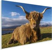 Een liggende Schotse hooglander Plexiglas 180x120 cm - Foto print op Glas (Plexiglas wanddecoratie) XXL / Groot formaat!
