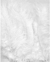 Witte Marabou veren - 7 tot 12 cm hoog -  15 Stuks