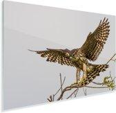 Landing van een smelleken Plexiglas 90x60 cm - Foto print op Glas (Plexiglas wanddecoratie)