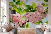 Fotobehang - Sakura Bloesem - 366 x 254 cm - Roze