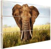 Afrikaanse olifant vooraanzicht Hout 80x60 cm - Foto print op Hout (Wanddecoratie)