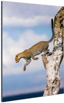 Springende luipaard Aluminium 60x90 cm - Foto print op Aluminium (metaal wanddecoratie)