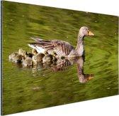 Ganzen in het water Aluminium 90x60 cm - Foto print op Aluminium (metaal wanddecoratie)