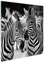 Zebra zwart wit Glas 180x120 cm - Foto print op Glas (Plexiglas wanddecoratie) XXL / Groot formaat!