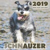 Schnauzer 2019 Mini Wall Calendar