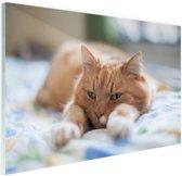 Kat ontspannen op bed Glas 90x60 cm - Foto print op Glas (Plexiglas wanddecoratie)