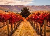 Papermoon Autumn Vineyard Vlies Fotobehang 250x186cm 5-Banen
