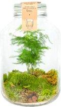 Kamerplant van Botanicly – Closed Jar 5L - Aspergus Plumosus – Hoogte: 30 cm