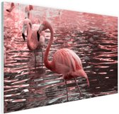 Roze flamingos in water met reflectie Glas 120x80 cm - Foto print op Glas (Plexiglas wanddecoratie)