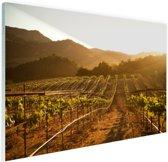 Wijngaard bij zonsondergang Glas 120x80 cm - Foto print op Glas (Plexiglas wanddecoratie)
