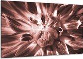 Glas schilderij Bloem   Bruin, Rood   120x70cm 1Luik   Foto print op Glas    F006312