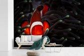 Fotobehang vinyl - Roodgekleurde Clown vis in een donker anemoon bij de Filipijnen breedte 420 cm x hoogte 280 cm - Foto print op behang (in 7 formaten beschikbaar)