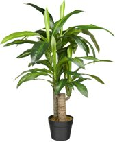 Kunstplant Dracaena fragans (90 cm)