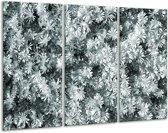 Glas schilderij Bloemen | Grijs, Groen | 120x80cm 3Luik | Foto print op Glas |  F006774